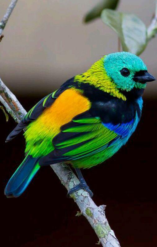 طيور جميلةة ~