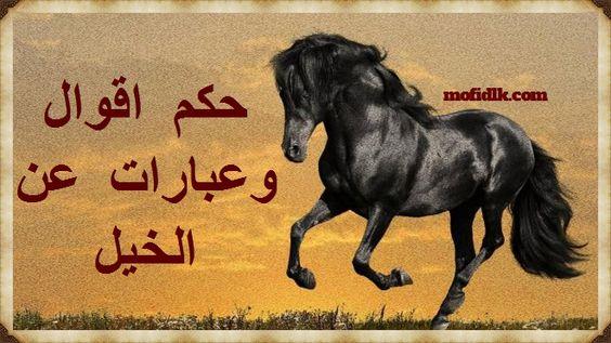 حكم عن الخيل اقوال وعبارات مكتوبة ومعبرة وجميلة عن الخيل موقع مفيد لك Horses Animals