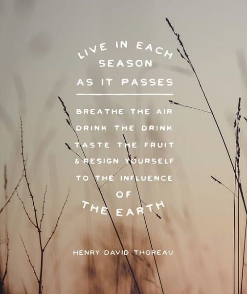 134 Exclusive Henry David Thoreau Quotes To Enrich Your Life