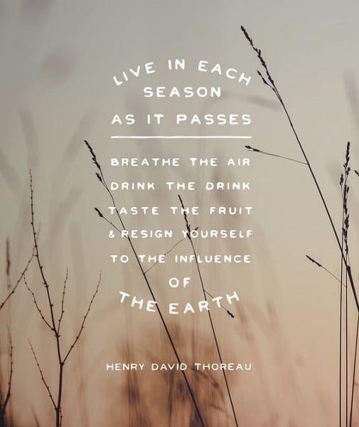 Thoreau Quotes Nature