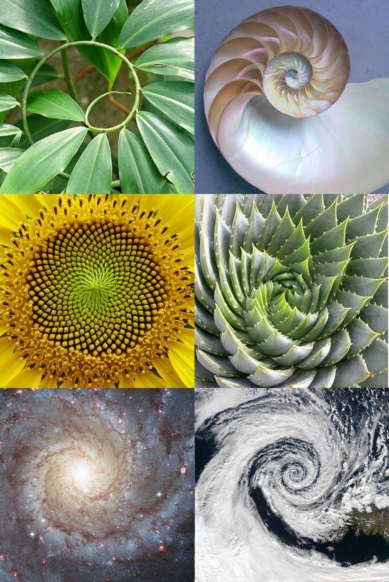 La géométrie dans la nature // Séquence de Fibonacci // Golden Ratio // Point Phi // Même rapport que Vitruve a vu dans le corps humain - 1 à PHI (1,618) - existe dans toutes les régions de la nature, des poissons qui nagent aux planètes tourbillonnantes.  Cette proportion divine, ou proportion divine, a été appelée la pierre angulaire de toute vie.