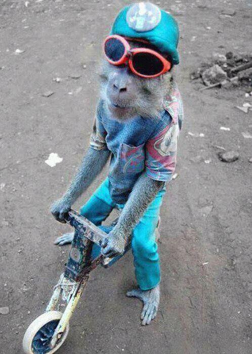 I bet that's a fixed gear bike, yo. amirite, mr. hipster monkey?