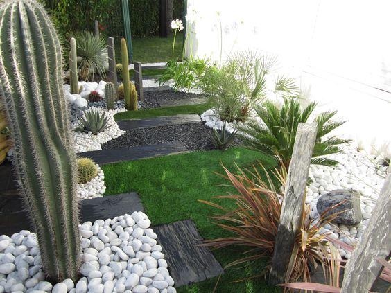 Galets blancs disposés autour de cactus dans un jardin contemporain