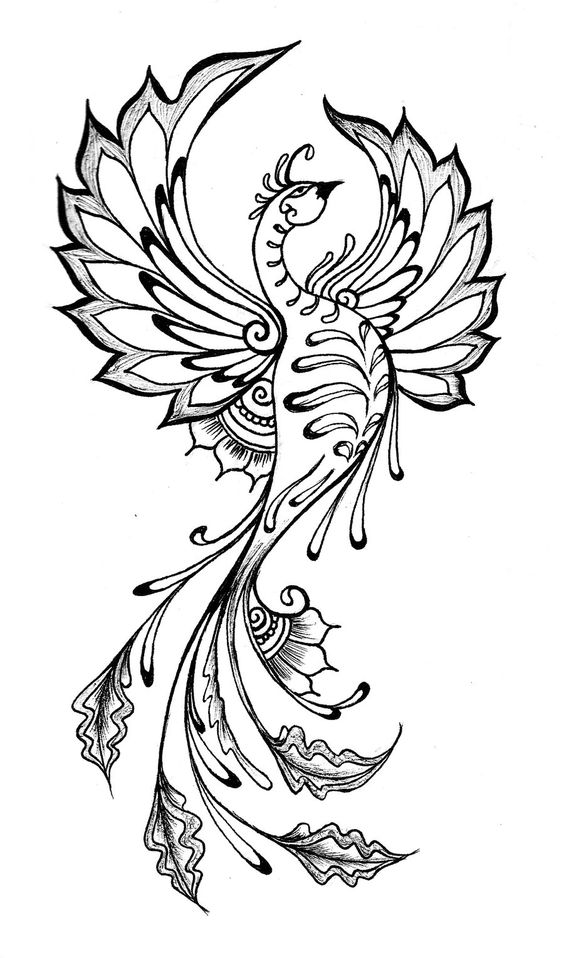 Tattoo Line Drawing Books : Phoenix henna and drawing on pinterest