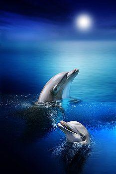 Julie L Hoddinott - Dolphin Delight