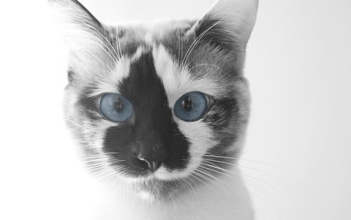 grafika cat, cute, and animal
