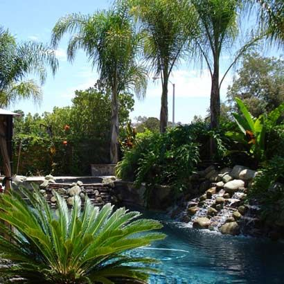 Trees tropical and queen palm tree on pinterest for Gardens around pools