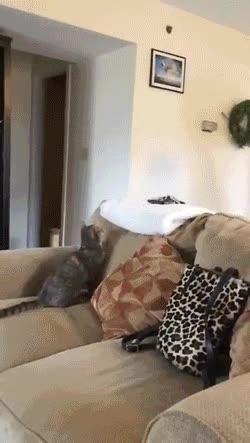 (GIF) Ninja Cat