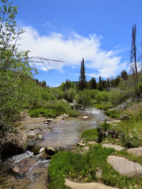 The Quixotic Angler: Silver City, Idaho and Jordan Creek