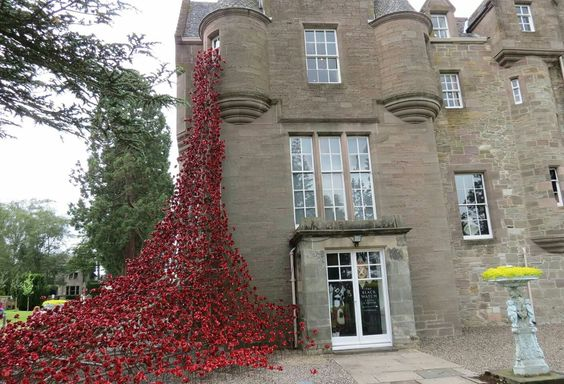 Weeping poppies at Black Watch Castle,  Perth