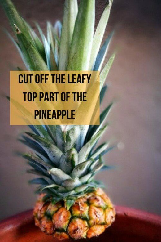How To Plant Grow Pineapple Top In 4 Easy Steps With Photos Dengarden Growing Pineapple Growing Pineapple From Top Pineapple Planting