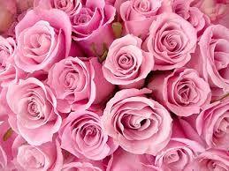 Bildergebnis für rosen