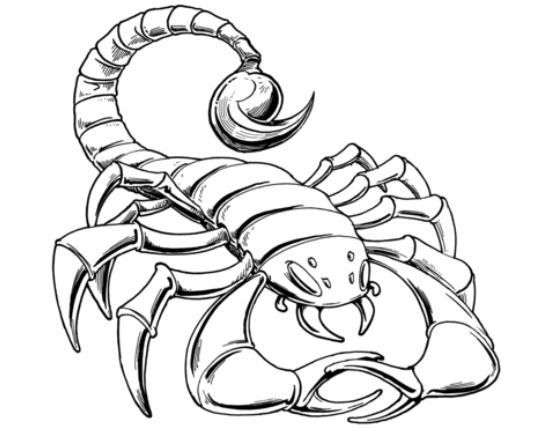 Scorpion Coloring Page Coloring Pages Bug Coloring Pages Free Printable Coloring Pages