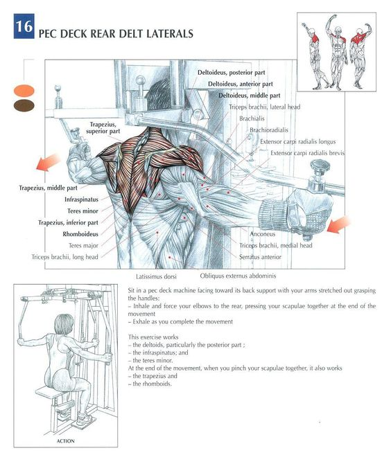 Peck Deck Rear Laterals ~ Repinned by Crossed Irons Fitness