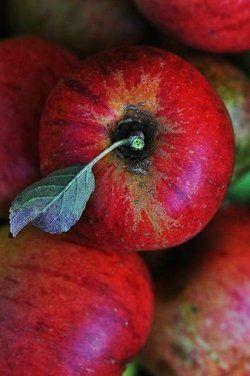 Crisp red apples--going apple picking in October!