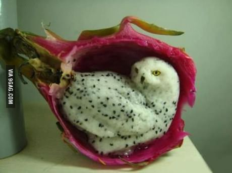 Snowy Owl Carved from Dragonfruit