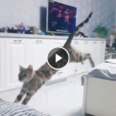 O gato erra os calculos e cai de cara
