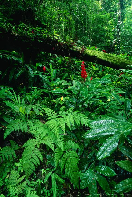 Tropical Rain Forest,