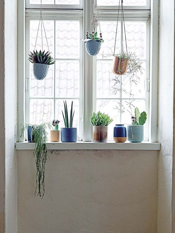 De cara al invierno renueva tu casa #plantas: