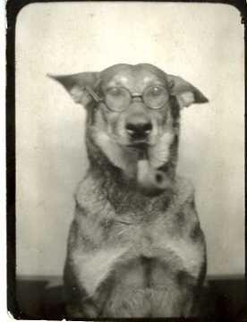 Photobooth Dog (The Professor), vintage photograph, 1944: