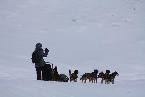 Dog sledding Jackson hole Wyoming