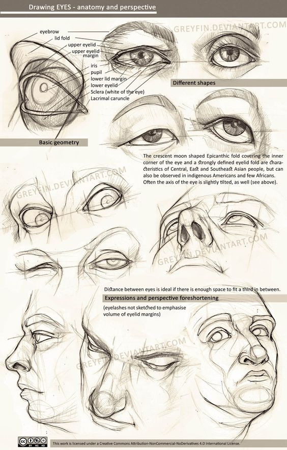 Character Design Eyes : Drawing eyes anatomy and perspective by greyfin