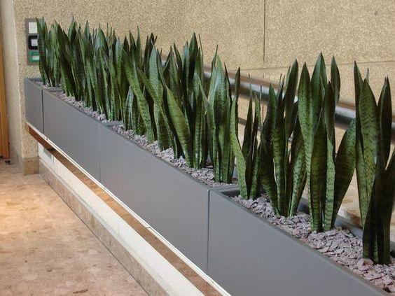 Ambientar la casa con plantas de interior interiorismo - Casas con jardin interior ...