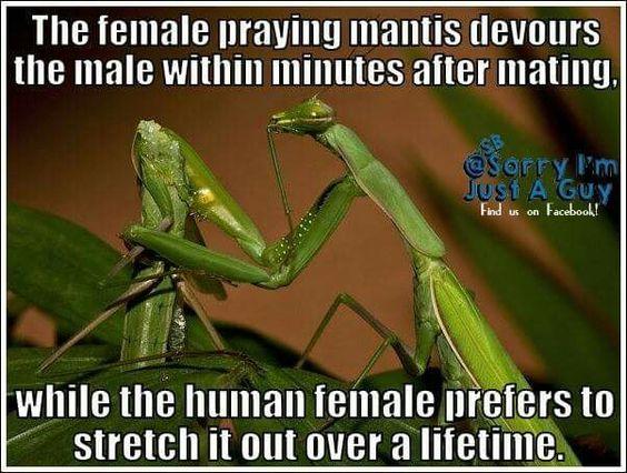 Die weibliche Gottesanbeterin verschlingt das Männchen in wenigen Minuten nach dem Geschlechtsakt... während das Menschenweibchen es vorzieht, dies über die gesamte Lebenszeit zu tun.