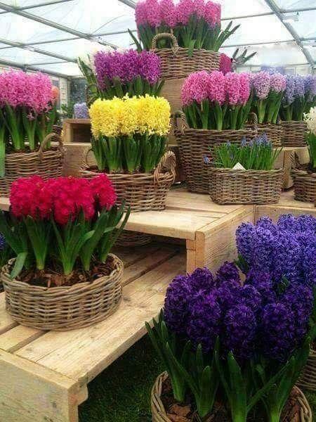 Yasaminizdan Guzellikler Yureginizden Sevincler Evinizden Bereket Hic E Mana Vietne Blumen Pflanzen Pflanzen Zimmerblumen
