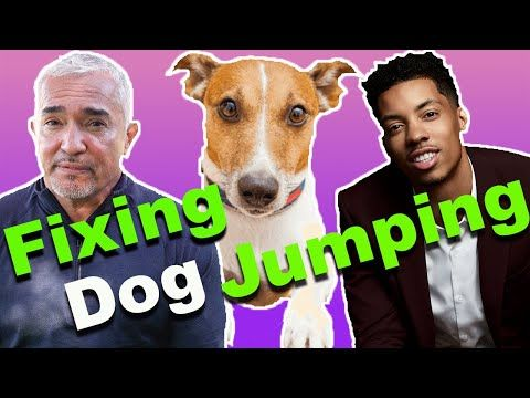 How To Stop A Dog From Jumping Ft Melvin Gregg Youtube Dogs