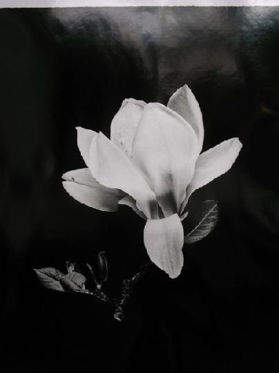 Shirana Shahbazi - Magnolie-01–2013 http://ow.ly/wbGRh