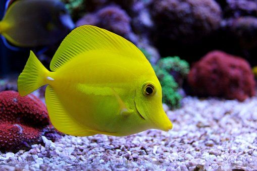 For Saltwater Fish For Sale Near San Francisco Go To Caesar S Tropical Fish Stop Searching Tropical Saltwater Fish For Sale Fish For Sale Tropical Fish Store