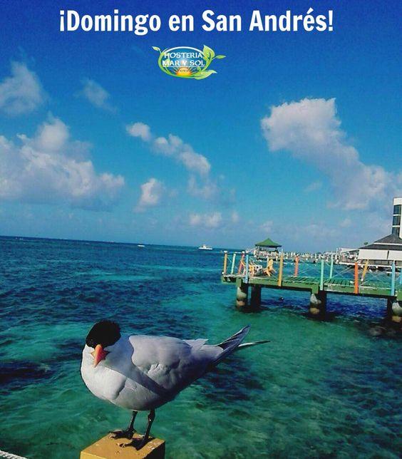 Y así se disfruta de un relajado #domingo en la #isla de #SanAndrés ¿Qué estás esperando? ¡Te esperamos! #HosteríaMarySol #Playa #Relaxing #Mar #Colombia #Turismo