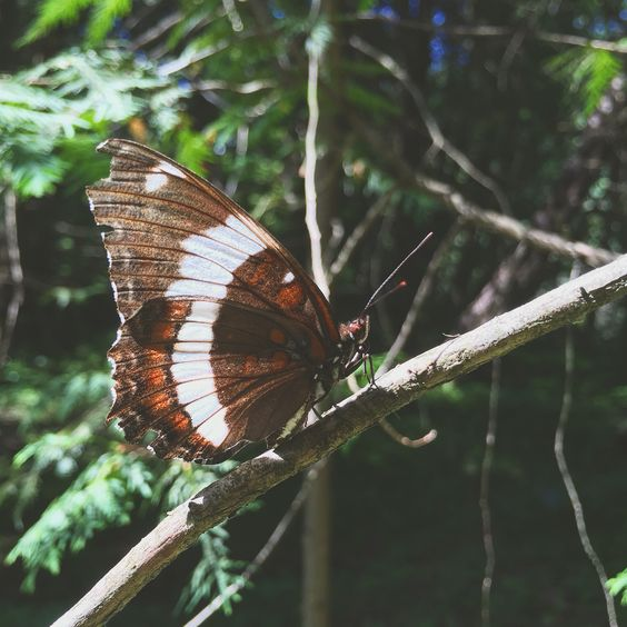 My forrest walking companion. This beautiful butterfly followed me wherever I went. #butterfly #magical #transformation #forrest #barefoot