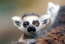 cute_animals - Google Search