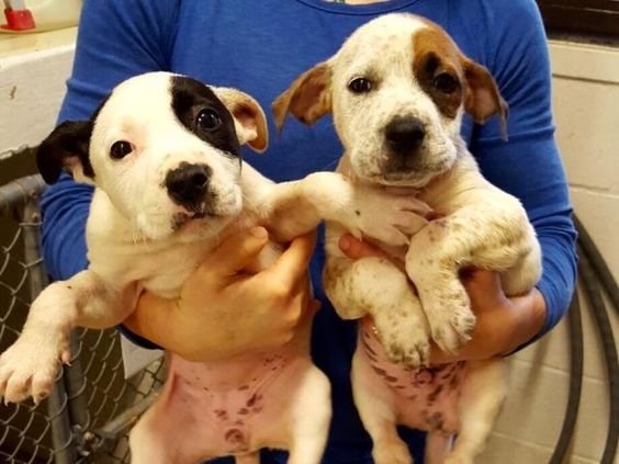 RESCUED!!! URGENT!!! PUPPIES ONLY 7 WEEKS OLD! This DOG