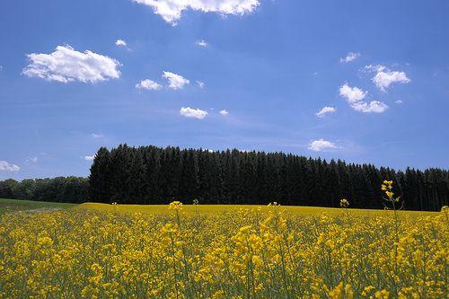 Blühende #Rapsfelder im #Frühling - ein entspannter Ausflug nach München Süd