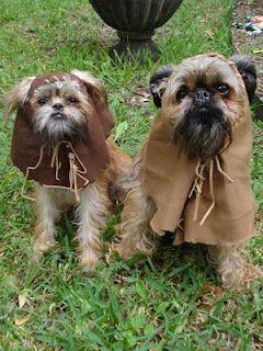 perfect dog costume!! @lauren!!