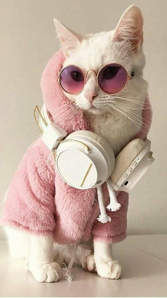 Now that's what I call a Cool Cat!