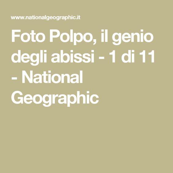 Foto Polpo, il genio degli abissi - 1 di 11 - National Geographic