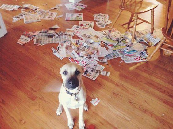chien-journaux-betise