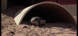 How to Create a desert tortoise habitat « Reptiles