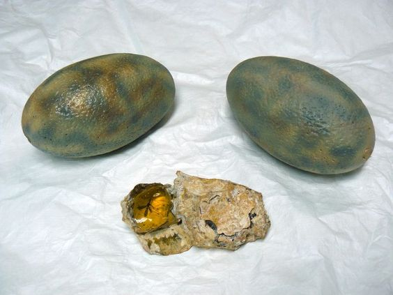 Researchers Looked Inside Dinosaur Eggs To Learn The