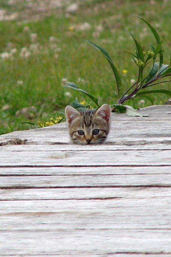 Cutie - Click for More...