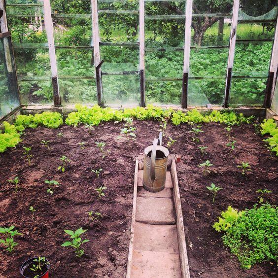 O prazer de plantar e colher meus ingredientes, simplesmente inesplicavel a arte de cozinhar e se alimentar bem do inicio ao fim por minhas proprias maos.