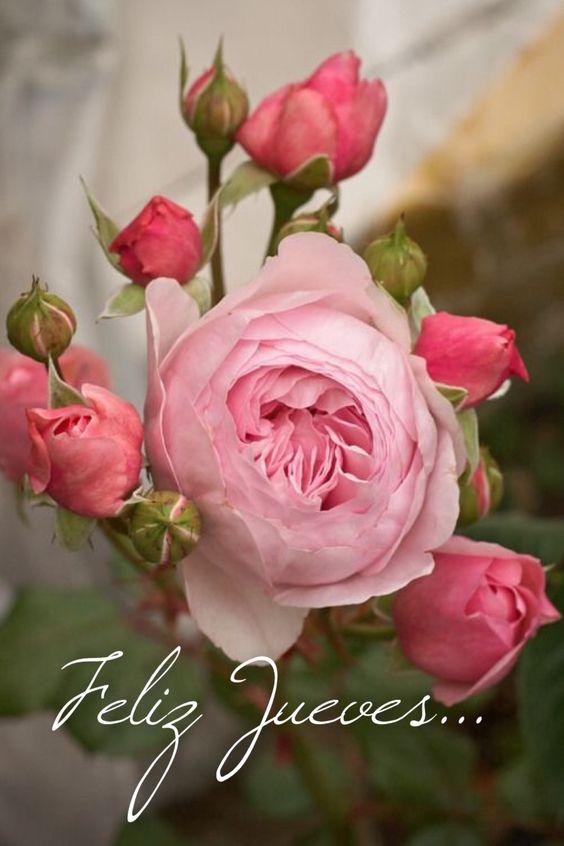 Feliz Jueves / Feliz Día / Jueves / Thursday / Happy Thursday  / Happy Day / Que pases un lindo día / Buenos Días / Good Morning