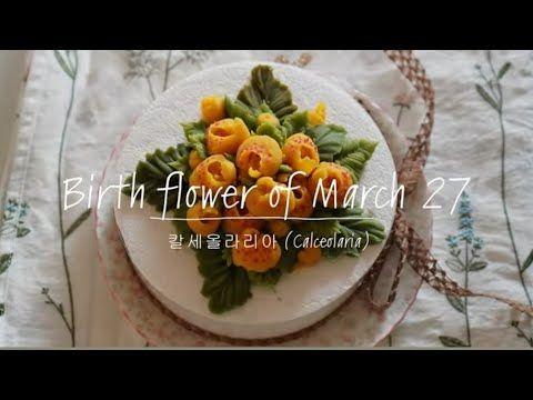 3월27일 탄생화 칼세올라리아 Calceolaria Birth Flower Of March 27th Youtube 2020