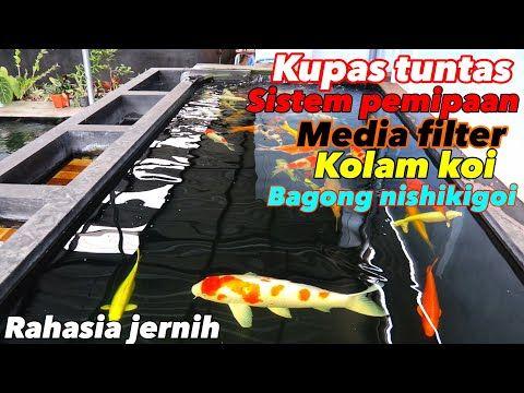 Filter Kolam Koi Jernih Sistem Filterasi Pemipaan Dan Media Filter Bagong Nishiki Goi Farm Youtube Pond Pumps And Filters Koi Pond
