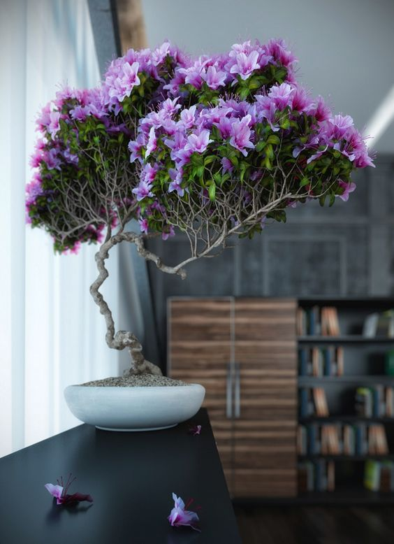 Houseplant-Bonsai-Tree-inside-living-space-blossomed-with flower-creating-a-splendid-atmosphere-in-the-living-space