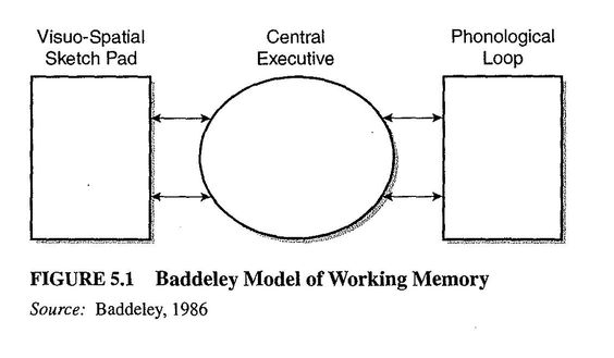 Every Study You Need To Know For As Psychology Baddeley And